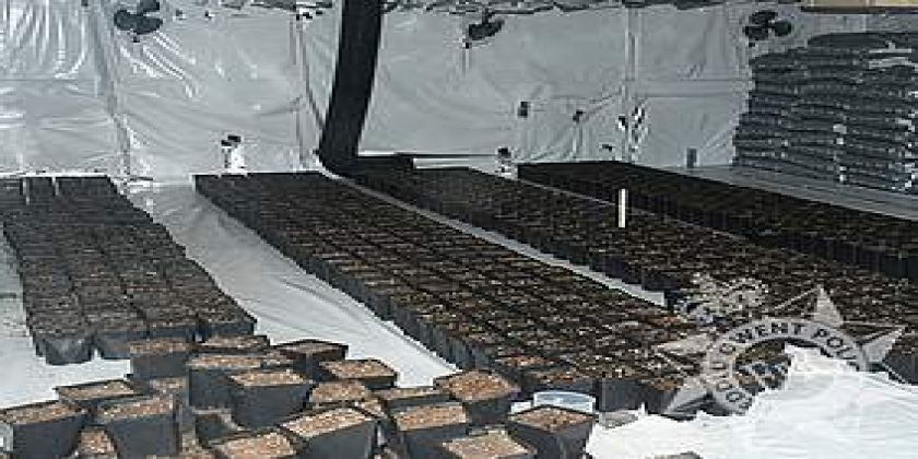 Cannabis Cultivation Uncovered At Abertillery Property