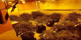 Cannabis Factory Found In Rhyl