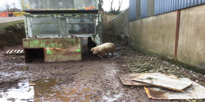 Bramble Hall Farm – Guilty Verdicts Returned
