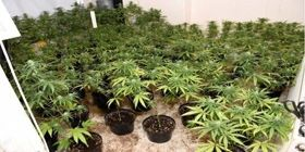 Nearly 150 Cannabis Plants Seized Following Warrington House Fire - Cheshire Police