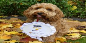 Council's Stray Dogs Service Achieves Gold Standard For Ninth Year