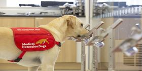 Sniff Of Hope – East Cheshire Nhs Trust Staff Provide Odour Samples For Covid-19 Detection Dog Trial