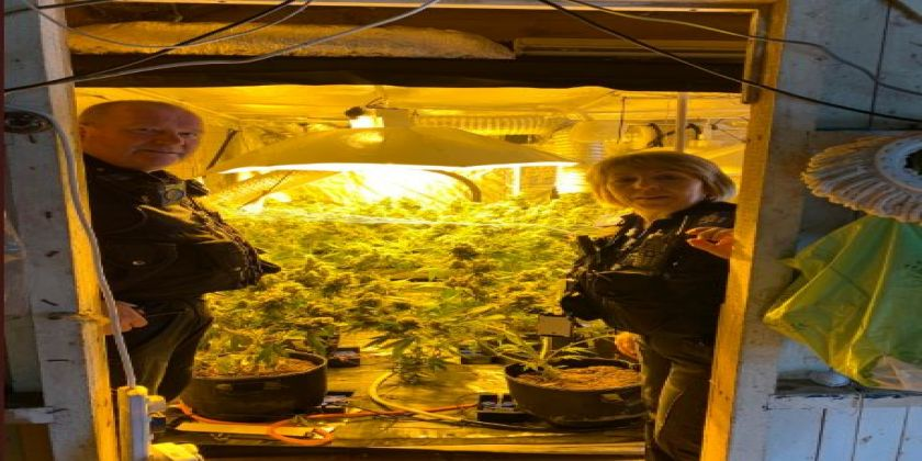 Warrant Uncovers Cannabis Worth £20,000 At House Near Carmarthen
